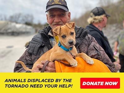 Help Animals Displaced by Nashville Tornado